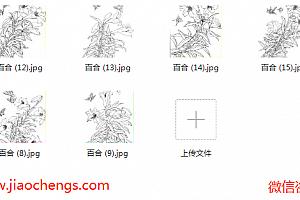 百合白描线稿百度网盘免费下载白描花卉系列线稿临摹高清jpg绘画素材