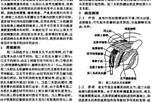 柳百智针刀疗法中医外科针刀疗法资料pdf百度云网盘下载学习中医针刀教程